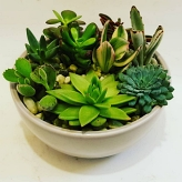 planted-bowls category