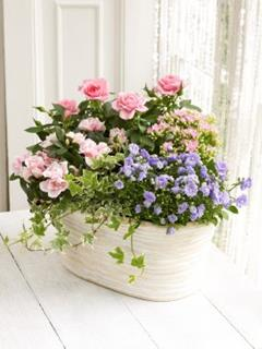 Mixed Flowering Planter