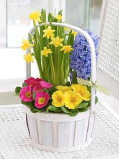 Large Spring Planted Basket