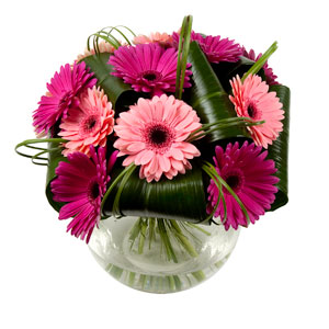 Purple Gerbera Hand-tied Bouquet