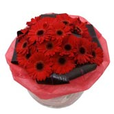 Love Wrap Gerbera Bouquet