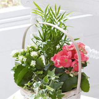 Planted Flowering Basket