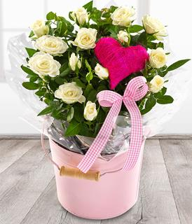 Home Sweet Home Potted Roses Arrangement