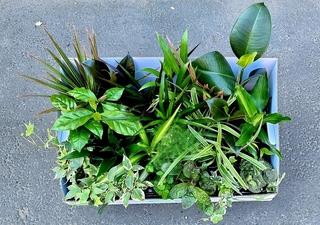Assorted Mini Plants