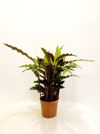 all-plants category