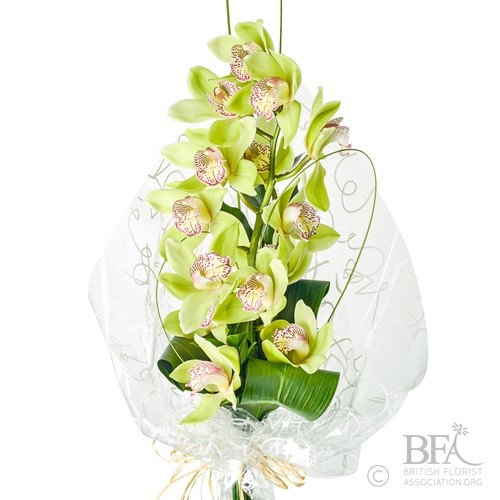 Wrapped Stem of Cybidium Orchid