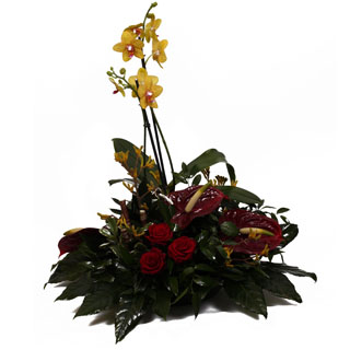 Contemporary Orchid Arrangement