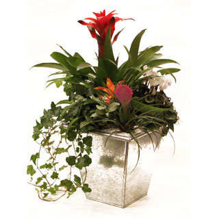 Tropical Paradise Plant Arrangement We Deliver Many Varieties Of