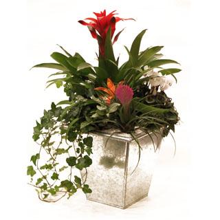 Tropical Paradise Plant arrangement