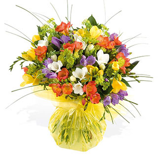 Freesia Zest Classic Scented Flowers
