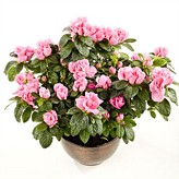 mothers-day-simply-plants category