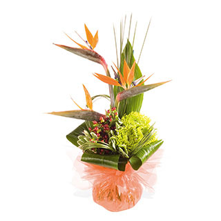 Captivating Birds of Paradise Flower Arrangement