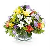 Freesia Rainbow Arrangement