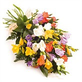 freesia category