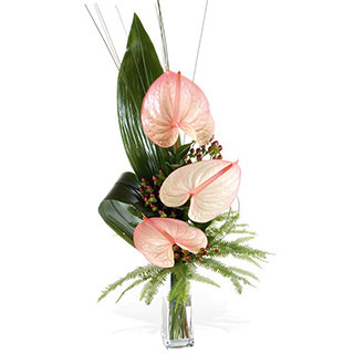Exotic Anthuriums Presented In Glass Vase