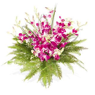 Singapore Orchid Arrangement