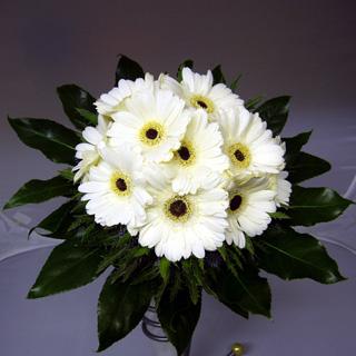 Gerbera Hand-Tied Bouquet