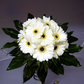 Gerbera Hand-Tied Bouquet