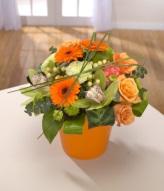 Tango Floral Arrangement