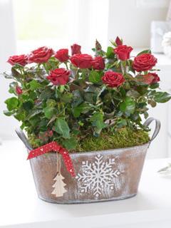 Christmas Rose Bowl