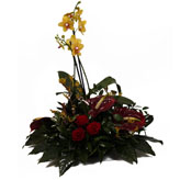 Contemporary Orchid Plant arrangement and Tropical flowers,delivered by The Harvest Garden,Edinburgh