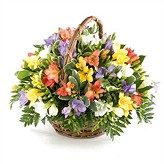 Fragrant Freesia Basket Arrangement