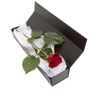 The One Red Rose in a Gift-Box